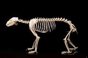 Archives_Bones-3