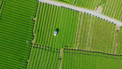 Aerial View – Japan Tea SAYAMA