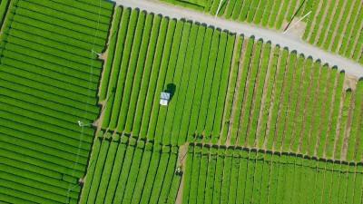 Aerial View – Japan Tea SAYAMA